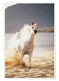 Premium poster White horse in the morning light