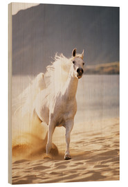 Wood print  White horse in the morning light - Vince Cavataio