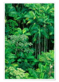 Premium poster Lush rainforest