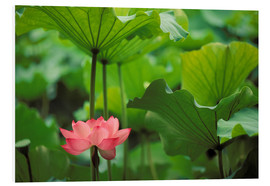 Foam board print  Lotus flower - Rita Ariyoshi