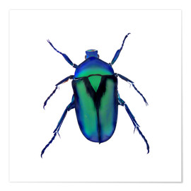 Premium poster  Green Beetle - Henry Lin