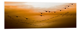 Foam board print  Geese flying into the sunset - Chad Coombs