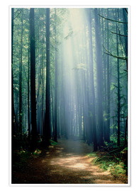 Premium poster Misty path through the woods