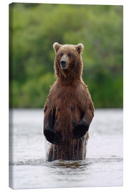Canvas print  Brown bear in Katmai National Park - John Hyde