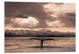 Foam board print  Humpback Whale at dusk - John Hyde