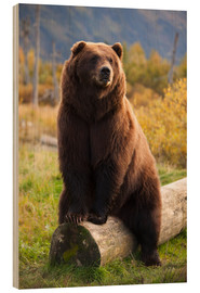 Doug Lindstrand - Relaxed brown bear