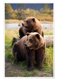 Doug Lindstrand - Two brown bears