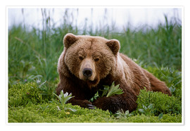 Premium poster Brown bear in the grass