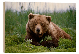 Wood  Brown bear in the grass - Doug Lindstrand