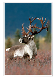 Doug Lindstrand - Portrait of a Caribou