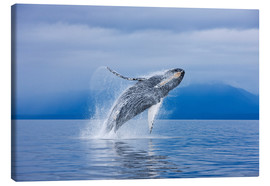Canvas  Humpback whales off Iceland Chichagof - John Hyde