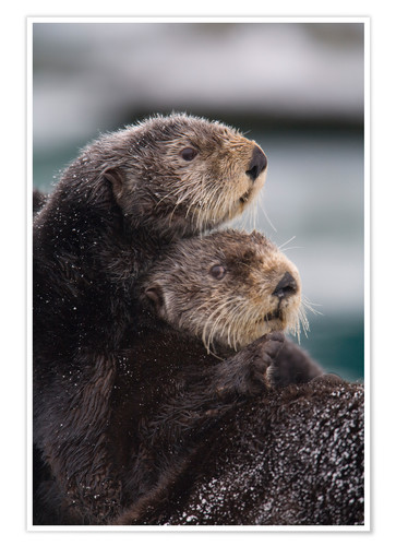 Premium poster Cuddly otters
