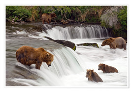 Premium poster Grizzly in Katmai National Park
