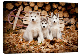 Canvas  Husky puppies - Jeff Schultz
