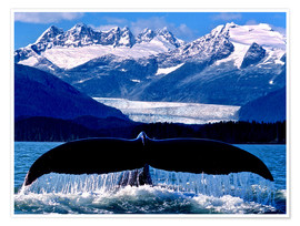 Premium poster Fin of a humpback whale