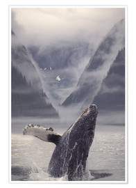 Poster  Humpback whale during emerge - Ron Sanford