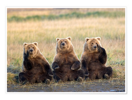 Premium poster Three Grizzlies in the meadow