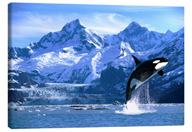 Canvas print  Orca in front of a glacier - John Hyde