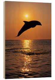 Wood print  Dolphin in the sunset - Tom Soucek