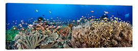 Dave Fleetham - Coral reef off Bali
