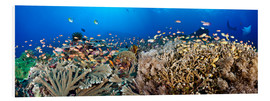 Forex  Coral reef off Bali - Dave Fleetham