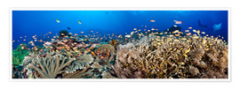 Premium poster  Coral reef off Bali - Dave Fleetham