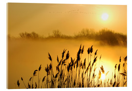 Acrylic print  Grasses at sunrise - Steeve Marcoux