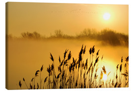 Canvas print  Grasses at sunrise - Steeve Marcoux