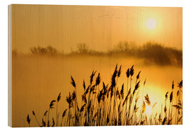 Wood print  Grasses at sunrise - Steeve Marcoux