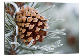 Alu-Dibond  Pine cone in the winter - Charles Tribbey