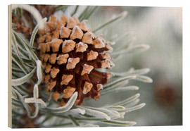 Wood print  Pine cone in the winter - Charles Tribbey