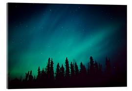 Acrylic print  Northern Lights over a spruce forest - Greg Hensel