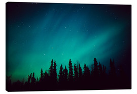 Canvas print  Northern Lights over a spruce forest - Greg Hensel