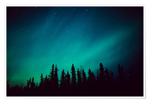 Premium poster Northern Lights over a spruce forest