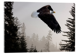 Acrylic glass  Bald Eagle in the Mist - John Hyde