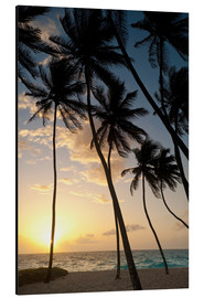 Aluminium print  Palm trees at dawn - Ian Cuming