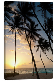 Canvas print  Palm trees at dawn - Ian Cuming