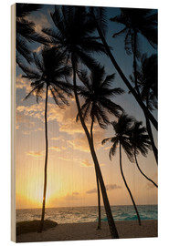 Wood print  Palm trees at dawn - Ian Cuming