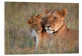 Acrylic glass  Lioness with cub - Ian Cuming