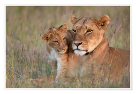 Premium poster  Lioness with cub - Ian Cuming