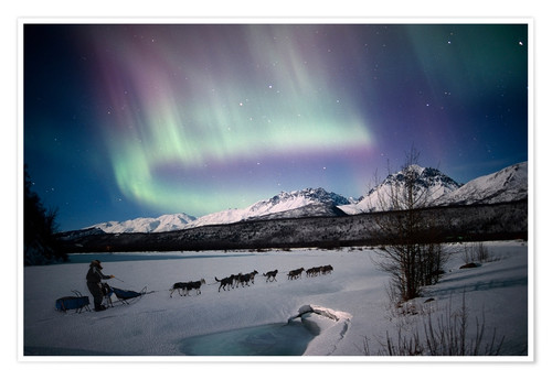 Premium poster Dogsledding on Matanuska River