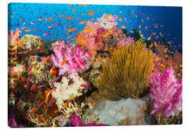 Canvas print  Coral off Fiji - Dave Fleetham