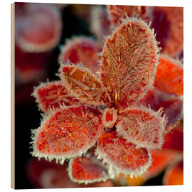 Wood print  Cranberry leaves in frost - Cathy Hart