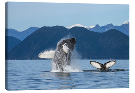 Canvas print  Humpback Whale off Alaska - John Hyde