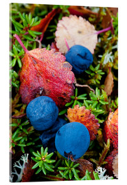 Cathy Hart - Blueberries in autumn