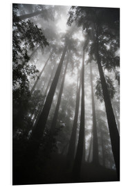 Forex  Treetops in fog - Paul Quayle