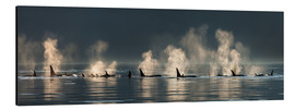 Aluminium print  Killer whales on the water surface - John Hyde