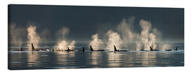 Canvas  Killer whales on the water surface - John Hyde