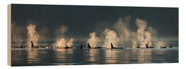 Wood print  Killer whales on the water surface - John Hyde