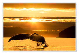 Poster Humpback whale